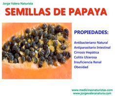 beneficios de la papaya | PROPIEDADES MEDICINALES DE LAS SEMILLAS DE PAPAYA