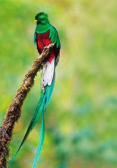 Costa Rica 2006, successfully spotted  a Quetzal bird