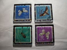 4 Square Glass Magnets from Poland Polska Insects, Butterfly, Moth and Ant, One of a Kind by BadCatCraft on Etsy