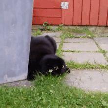 cat ninja sneaky