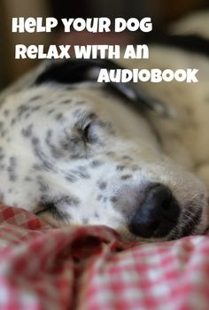 New research has found that playing an audiobook may help dogs relax more than music or specially designed dog CDs