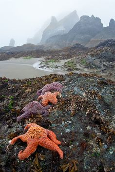 Low tide at Shi Shi, Olympic National Park, Washington.  Photo: bnzai9, via Flickr