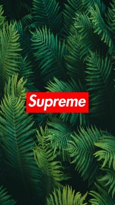Supreme Leaves wallpaper now. Browse millions of popular wallpapers and ringtones on Zedge and personalize your phone to suit you. Browse our content now and free your phone Wallpaper Images Hd, Hype Wallpaper, Wallpaper Backgrounds, Leaves Wallpaper, Graffiti Wallpaper Iphone, Game Wallpaper Iphone, Supreme Background, Pintura Hippie, Supreme Iphone Wallpaper