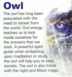 Owls have been invading my space - lately they are everywhere,  TV, FB, pinterst, magazines, when out and about....must take heed.