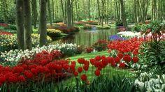 Garden Flowers Wallpaper beautiful+flowers | amazing hd flowers wallpaper | beautiful