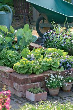 Veg Patch, Sunflower Flower, Small Garden Design, Different Plants, Green Garden, Plantation, Garden Crafts, Garden Paths, Vegetable Garden