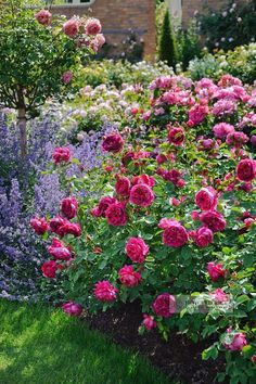 Lavender / rose / peony / Romantic cottage garden / gardening ideas / inspiration