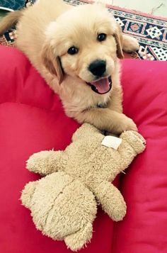 Golden puppy smile