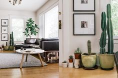 Paint colors that match this Apartment Therapy photo: SW 6004 Mink, SW 6006 Black Bean, SW 6116 Tatami Tan, SW 0041 Dard Hunter Green, SW 7078 Minute Mauve