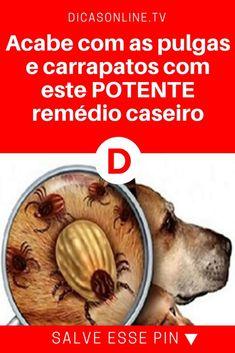 Pulgas e carrapatos | Acabe com as pulgas e carrapatos com este POTENTE remédio caseiro.