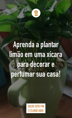 Eco Garden, Welcome To The Jungle, Plantar, Perfume, Spiritual Life, Botany, Herbs, Creative, Nature