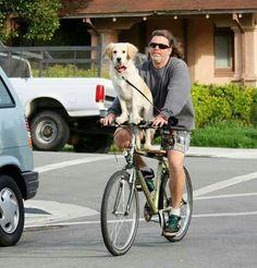 Foto bioguia,perro en bici