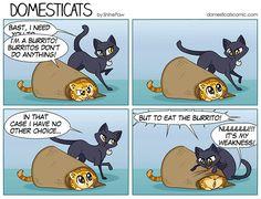 Cats...gotta love em'