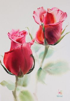 Rose Drawing Watercolor without Drawing Watercolor Rose, Watercolor Cards, Watercolor Illustration, Watercolor Paintings, Watercolors, Acrylic Painting Flowers, Plant Drawing, Arte Floral, Botanical Prints