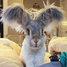 """3,022 Likes, 964 Comments - Wally the Bunny (@wally_and_molly) on Instagram: """"Wally? You could be a butterfly with those ears. #butterflywingbunnyears  #rabbitsofinstagram…"""""""