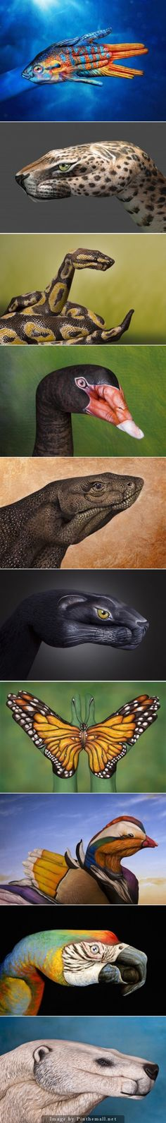 Guido Daniele Shows Off His Incredible Hand-Painting Animal Art in Photos - created via http://pinthemall.net