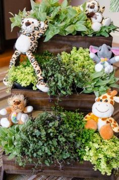 Party Ideas Safari Jungle themed