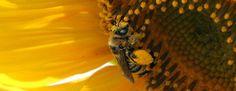 Bee Happy | Beekeeping Supply, Inc.