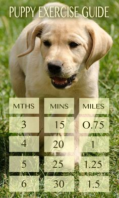 Puppy Exercise Chart in Miles and minutes for each month of age