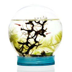 {Evivo renewable ecosystem} Globus America - watch the evolution of shrimp + their enviroment. my inner-science-geek-girl is squea!