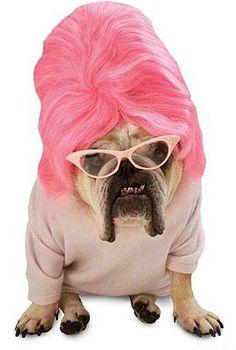 Zelda Bouffant Dog Costume.