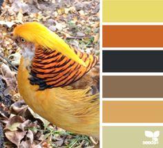 feathered autumn