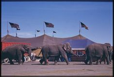 Color Photos of the Ringling Brothers, Barnum and Bailey Circus - Brian Resnick - The Atlantic Ringling Circus, Ringling Brothers Circus, Big Top Circus, Circus Train, Circus Circus, Elephant World, Vintage Circus Posters, Barnum Bailey Circus, Circo Vintage