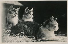 This mom and her kids, 1942 | 40 Sweet Cat Photos Of The '40s
