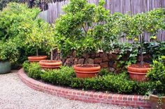 landscaping with fruit trees - Google Search