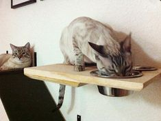 Cat shelf/dinning room cat set by CatastrophiCreations on Etsy, $34.00 #CatRoom