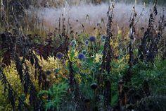 echinops piet oudolf | piet oudolf | Flickr