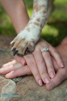 Pets at your wedding. Photo by Daniel Taylor.