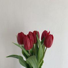 Exotic Flowers, My Flower, Flower Power, Wild Flowers, Beautiful Flowers, Beautiful Gardens, Aesthetic Themes, Flower Aesthetic, Red Aesthetic