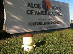 A sunny day at AVA for Aloe Al!