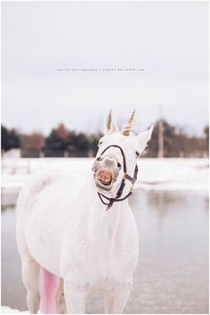 Mint | The Winter Unicorn - Texas Equine Photography | Karinda K Equine Photography