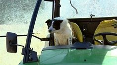 Tractor Driving Dog Causes Mayhem on Scotland Highway (and on Twitter!)