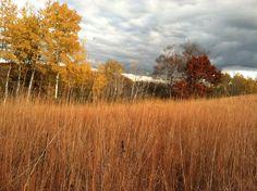 White Bear Lake, Minnesota Tamarac Park. White Bear Lake, Minnesota, The Neighbourhood, Wanderlust, Country Roads, Park, Travel, The Neighborhood, Viajes