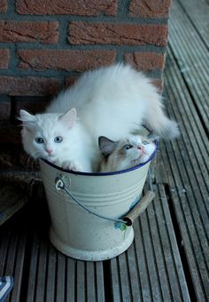 "* * "" I founds dis pail first ands ya gotta try and crams yerself in heres. Yer crushin' meez. Nowz gets out airhead ! """