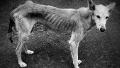 El FBI clasifica el maltrato animal como un delito IGUAL de grave que un homicidio o una violación – AdriBosch's Magazine