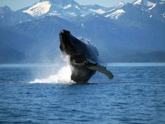 Listen to the whales of the Bering Strait | Earth | EarthSky