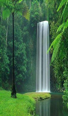 Millaa Millaa Falls, Queensland, Australia: