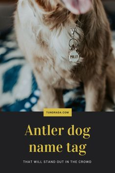 Durable and trendy antler name tags for outdoorsy pups. Visit the site to find name tags in all size, customizable as you wish! I work with each order by myself and give you a satisfaction guarantee. Dog Name Tags, Dog Id Tags, Find Name, Dog Antlers, Golden Retrievers, Dog Names, Puppy Love, Reindeer, Puppies