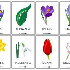 Karty - wiosenne kwiaty - Printoteka.pl Spring Activities, Activities For Kids, Carson Dellosa, Truffles, Montessori, Planting Flowers, Preschool, Memories, Projects