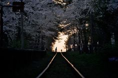 Tsugaru railway in Aomori Japan. This unmanned station sits near a natural tunnel formed by blooming cherry blossoms in spring. It is a beautiful spring scene in Japan.