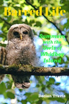 Barred Life Summers with the Owls of Whidbey Island