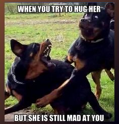 When you try to hug her, but she is still mad at you.