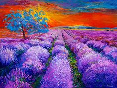 Lavender sunset 27x23 inch original oil painting by by artnikolov, $430.00