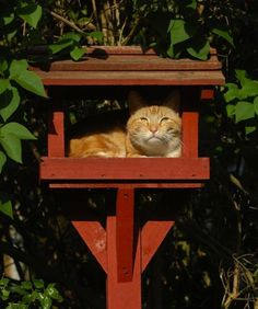 Cat Lawn And Garden Killing Animals Cats Decoded