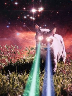 think this is my cat in the backyard at night...