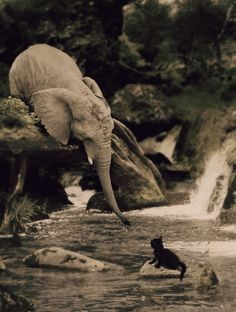 baby elephant reaches out